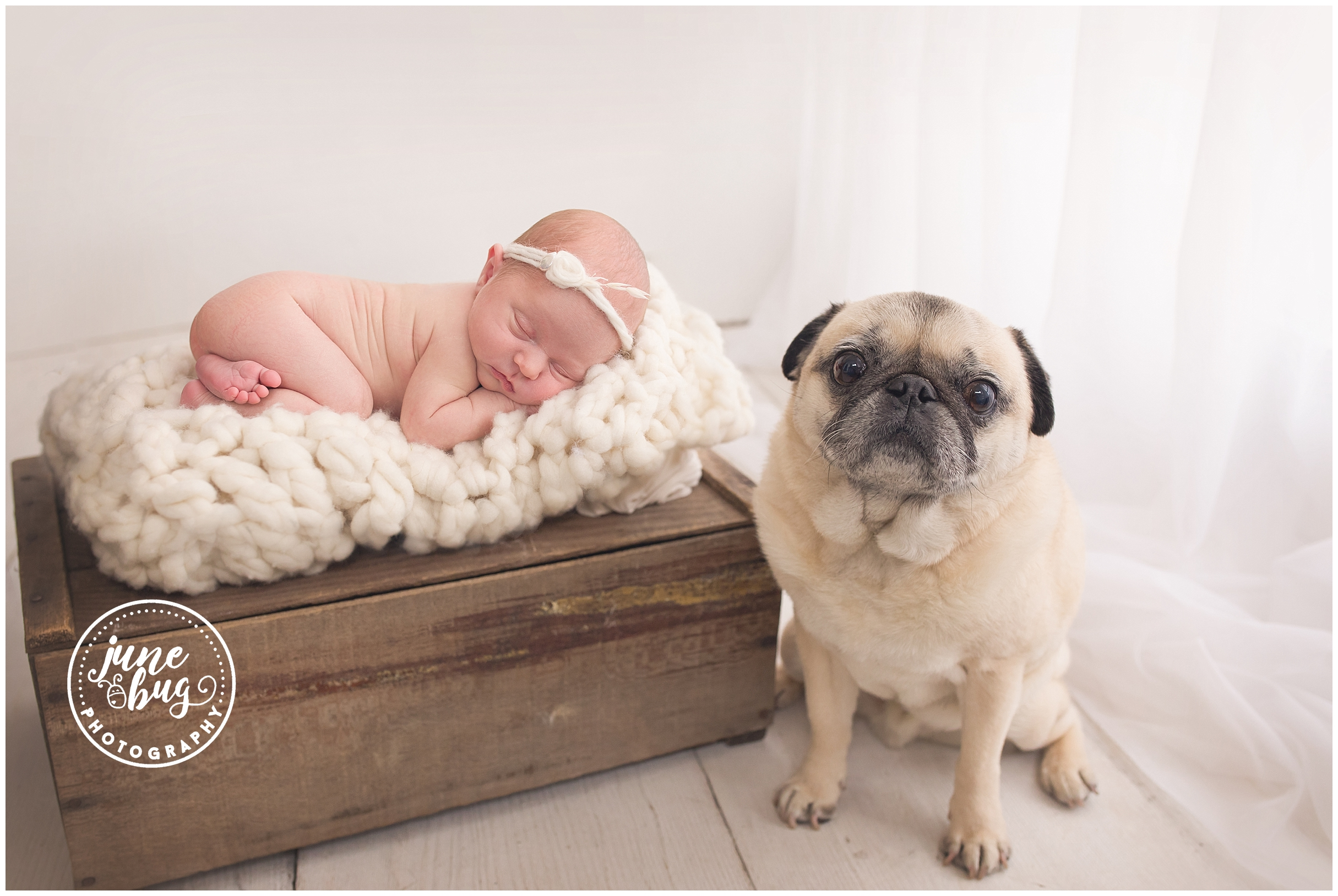 Babies And Pugs Mill Creek Newborn Photography Session