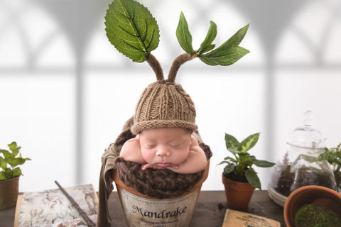 Mandrake Baby Harry Potter Themed Newborn Photos Mill Creek